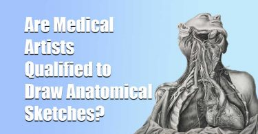 Are Medical Artists Qualified to Draw Anatomical Sketches